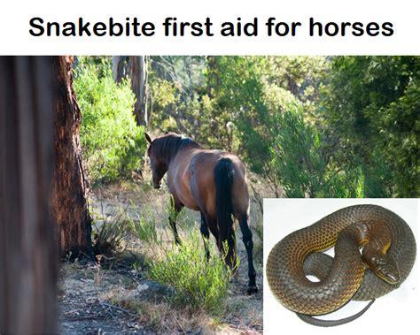 horse snakebite snakes horses treatment cheap simple snake health