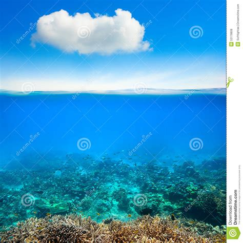 coral reef wallpaper underwater coral reef background stock photo image Underwater