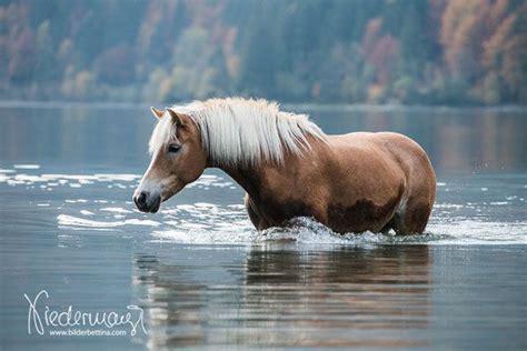 Urlaub Mit Eigenem Pferd Am Meer
