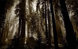 Dark, Woods, Wallpapers