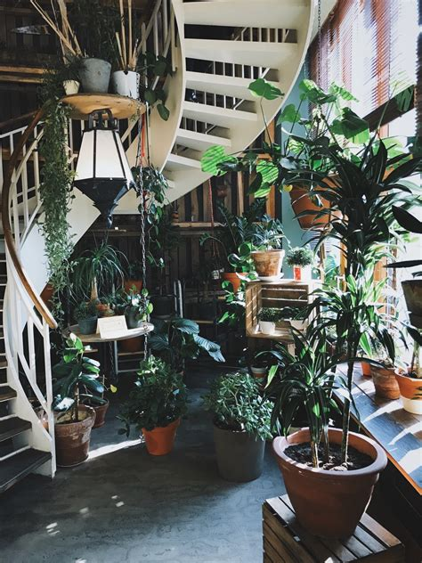 green leafed plant  pot photo  plant image  unsplash