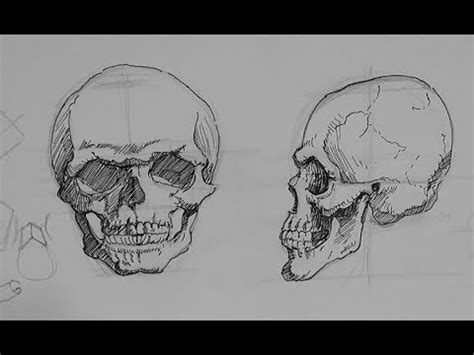 ink drawing tutorials   draw  skull  ink