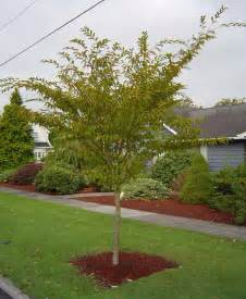 landscaping landscaping small trees pictures