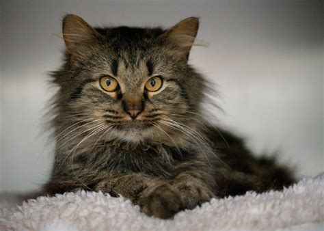 oconee county animal shelter athens banner herald