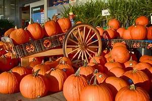 Free, Images, Wagon, Fall, Orange, Autumn, Pumpkin, Halloween, Holiday, Colorful, Healthy