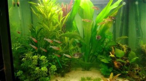 le changement de substrat dans un aquarium peupl 233 pour les