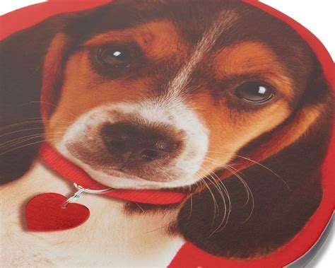 We did not find results for: Puppy Valentine's Day Card | American Greetings