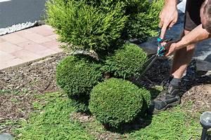 Buchsbaum Schablone Kaufen : thuja in form schneiden so machen sie 39 s richtig lebensbaum ~ Watch28wear.com Haus und Dekorationen