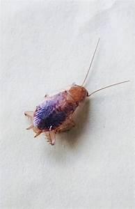 Kakerlaken ähnliche Insekten : welche schabe kakerlake ist das wer weiss ~ Articles-book.com Haus und Dekorationen