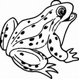 Frog Coloring Outline Clipart Tree Frogs Printable Amphibians Disegno Sheet Animals Rana Reptiles Frosch Toads Colouring Clipartmag Colorare Rane Internet sketch template