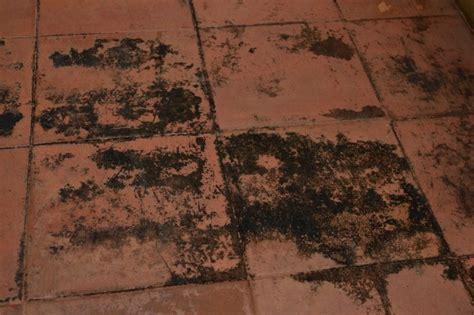 mold grow  laminate flooring   concrete