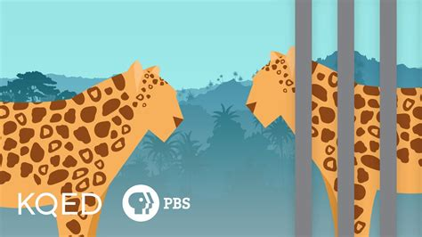 zoos bad animals
