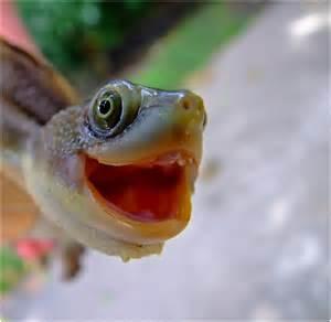 Smiling Turtle
