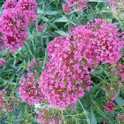 Lange Blühende Blumen by Die Besten Dauerbl 252 F 252 R Endlos Sch 246 Ne Staudenbeete