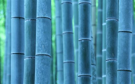bambu fondos hd