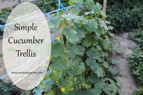 trellis for cucumbers diy friday simple cucumber trellis stoney acres