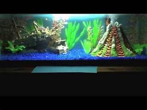 The Real Nemo Aquarium - YouTube