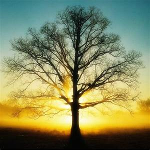 The Tree Pictures ~ Hits All
