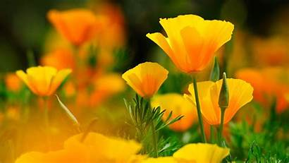 Yellow Flower 4k Wallpapers Flowers Background Pc