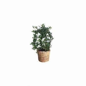 Cache Pot Plante : lierre boule cache pot plantes et jardins ~ Teatrodelosmanantiales.com Idées de Décoration