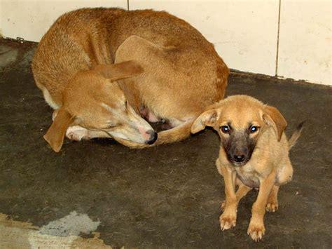 File Ee  Dog Ee    Ee  Rescue Ee   Shelter Jpg