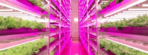 led plant lights horticultural led grow lights hort americas