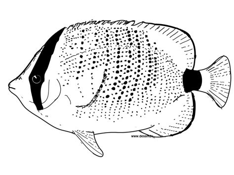 Tropical Fish Coloring Pages by Coloring Tropical Fish