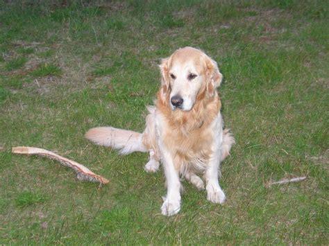 aus uebung fuer das wohl bekannteste hunde kommando