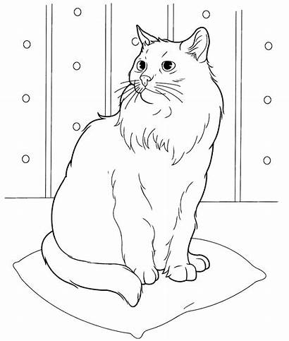 Coloring Cat Pages Adults Easy