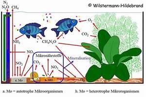 Sauerstoff Im Aquarium : vivo autarkes kosystem geschlossene biosph re mit ~ Eleganceandgraceweddings.com Haus und Dekorationen