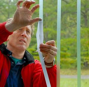 New Window Tape Can Significantly Reduce Bird Collisions ...