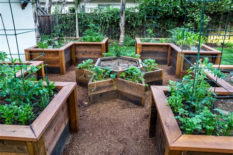 raised garden beds for vegetables planting vegetables mantis uk expect big things