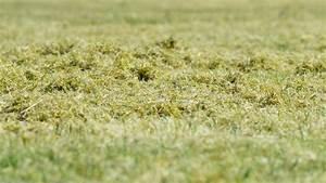 Rasen Kalken Wann : rasen kalken vorgehen zeitpunkt nutzen plantura ~ Orissabook.com Haus und Dekorationen