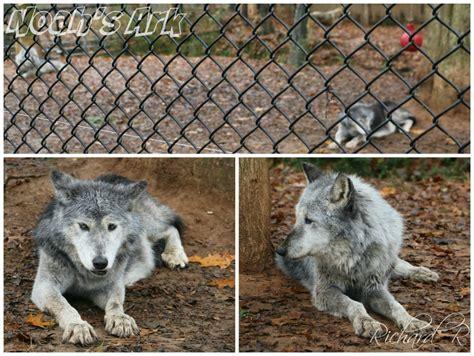 noah s ark animal sanctuary 52 photos animal rescue