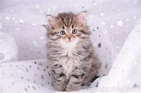 photo de chaton trop mignon photos de nos animaux