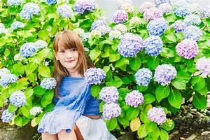 Sind Hortensien Winterhart : hortensien sind sie giftig ~ Lizthompson.info Haus und Dekorationen