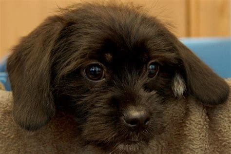 Bridgeville And Statewide Lawmakers Mull Ban On Puppy