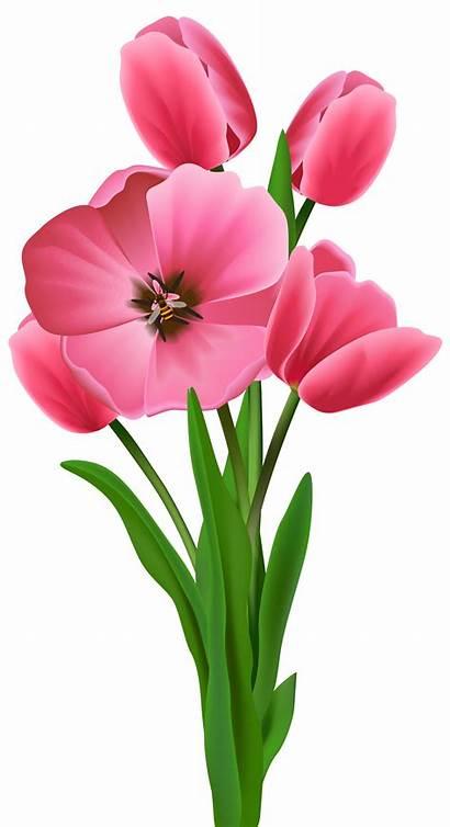 Tulips Transparent Flowers Spring Clipart Flower Blumen
