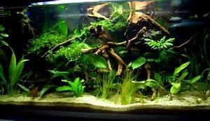 Aquarium Dekorieren Ideen : wie mache ich mein aquarium mit pflanzen sch n seite 2 ~ Bigdaddyawards.com Haus und Dekorationen