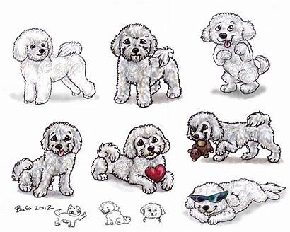 Bichon Frise Bafa Deviantart Dog Drawing Drawings