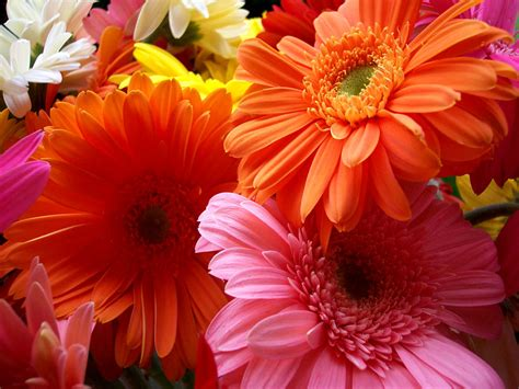 Wallpapers Of Flowers Beautiful Wallpapers Of Flowers