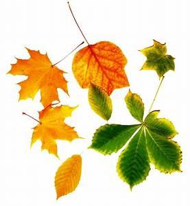 Kostenlose Bilder Herbst : herbstliche bilder kostenlos simple garten im herbst dekorieren best of kostenlose foto natur ~ Yasmunasinghe.com Haus und Dekorationen