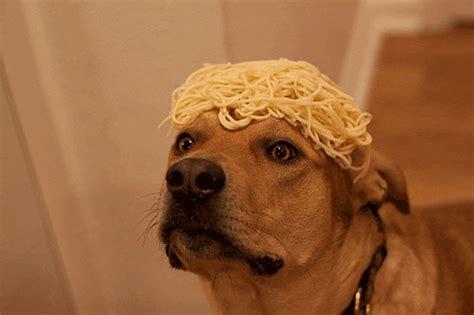 trending gif tagged dog blinking spaghetti
