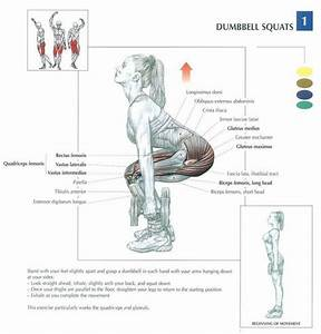 Health And Fitness  Weight Training And Anatomy On Pinterest