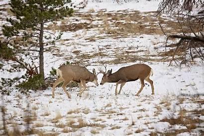 Park Estes Rocky Mountain National Colorado Mule
