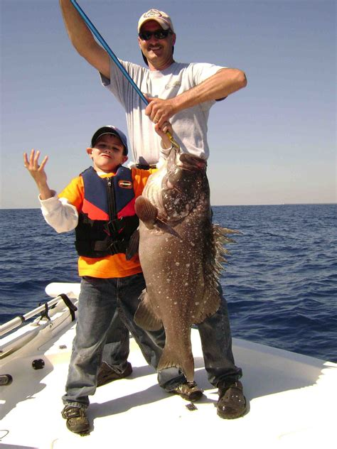 grouper type reply fishing