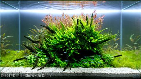 Aquascape Aquarium Tutorial A Stepbystep Guide For