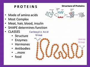 Gene Expression 1  Rna And Protein Synthesis