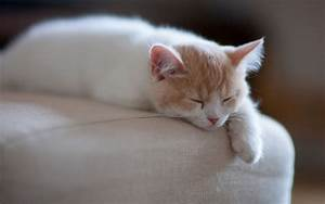 1920x1200, Px, Animals, Cat, Kitten, Sleeping, High, Quality, Wallpapers, High, Definition, Wallpapers