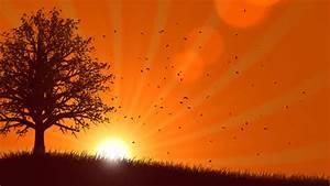 4 Seasons: Summer With Sunrise (Animated Background) Stock ...